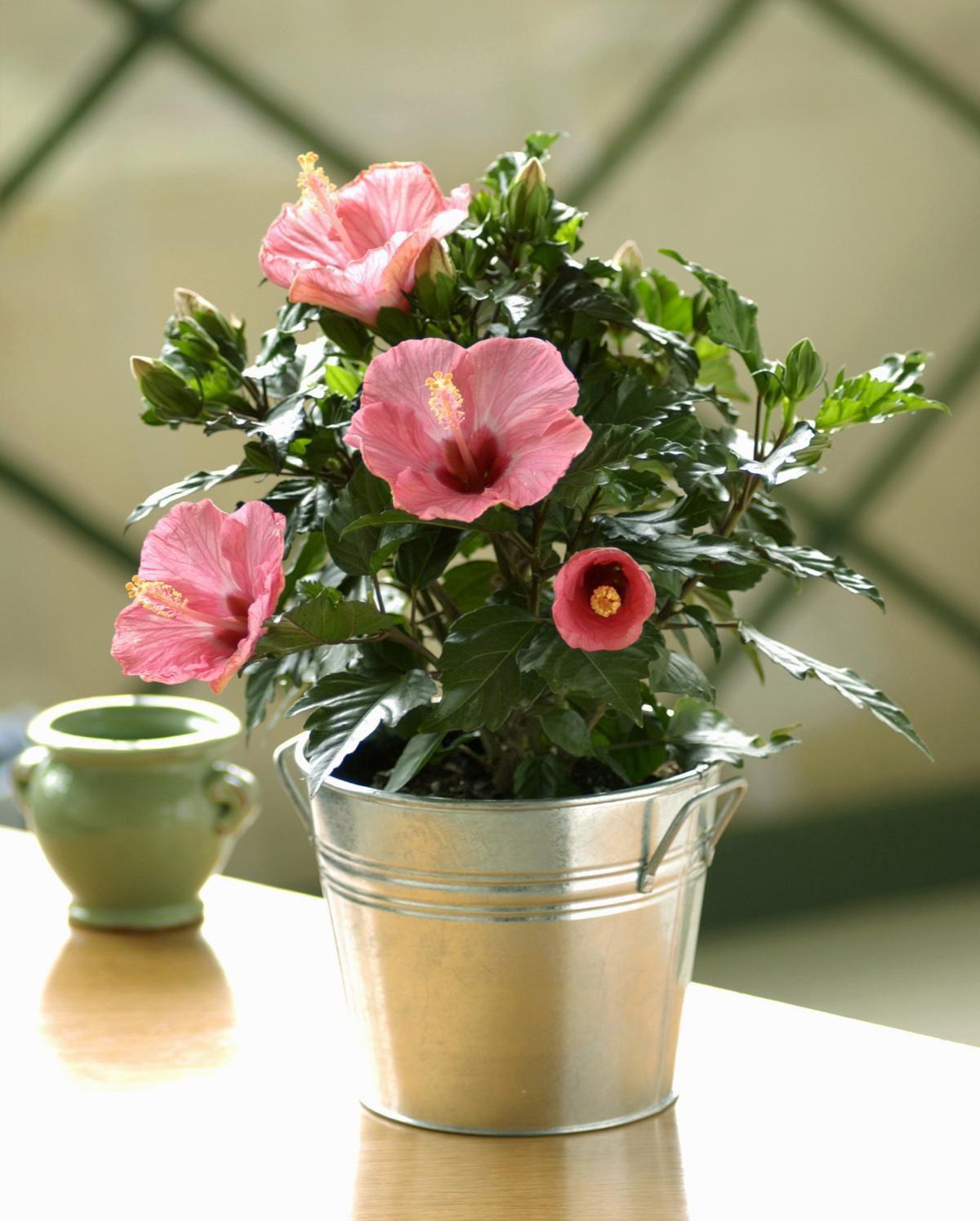 Фото домашних цветов с маленькими цветочками