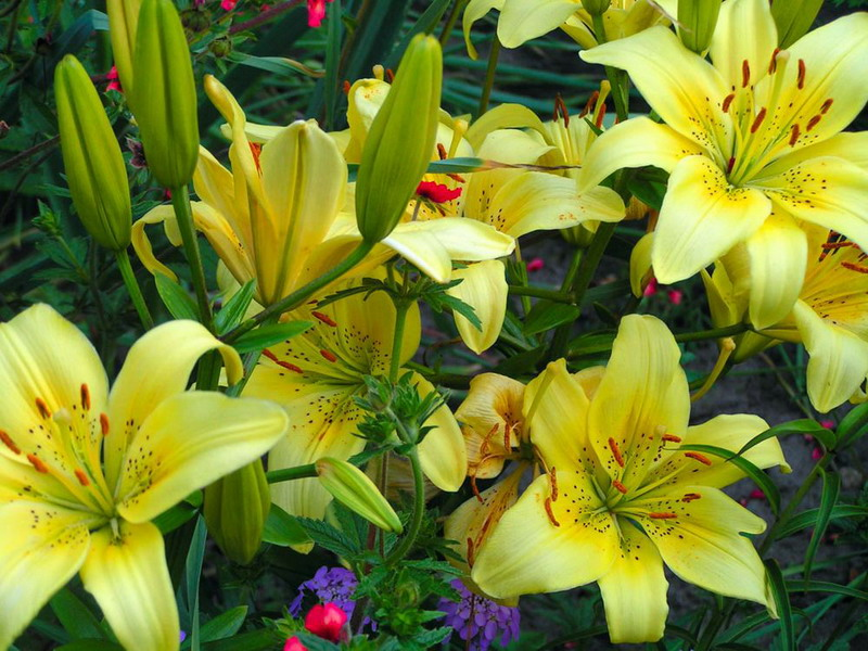 любимые цветы бунина: